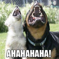 AHAHAHAHA! Dog Laughing Meme