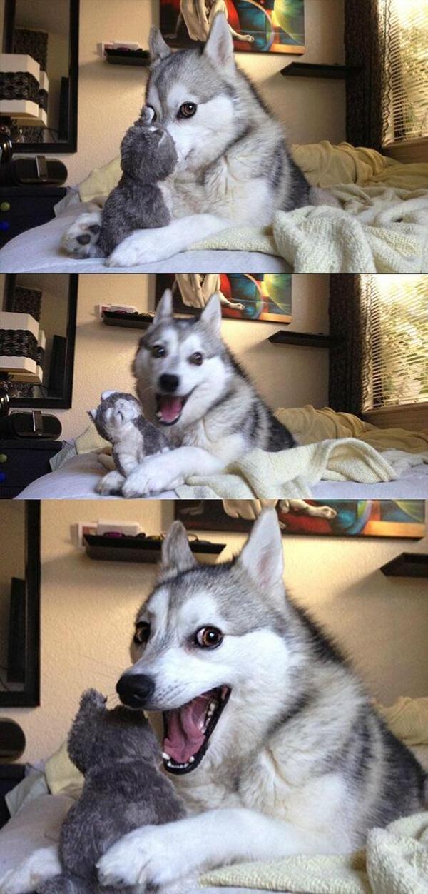Cutest Dog Laughing Meme