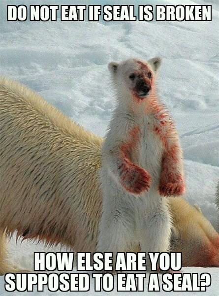 Do Not Eat If Seal Polar Bear Meme