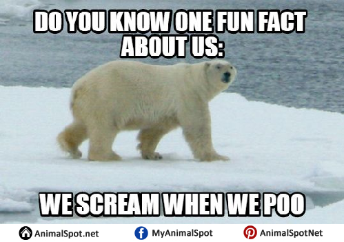 Do You Know One Fun Polar Bear Meme