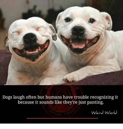 Dogs Laugh Often Dog Laughing Meme