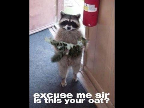 19 Hilarious Raccoon Meme That Make You Smile | MemesBoy