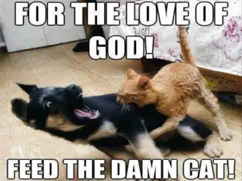 For The Love Funny Cat Memes Clean