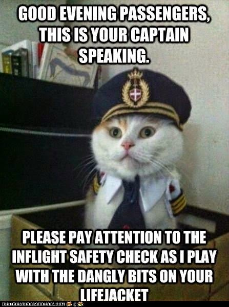 Good Evening Passengers Funny Cat Memes Clean