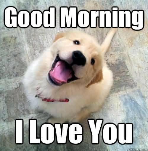 Good Morning I Love You Love Meme
