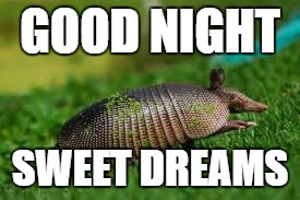 Good Night Sweet Dreams Armadillo Meme