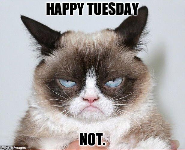 Happy Tuesday Not Tuesday Meme