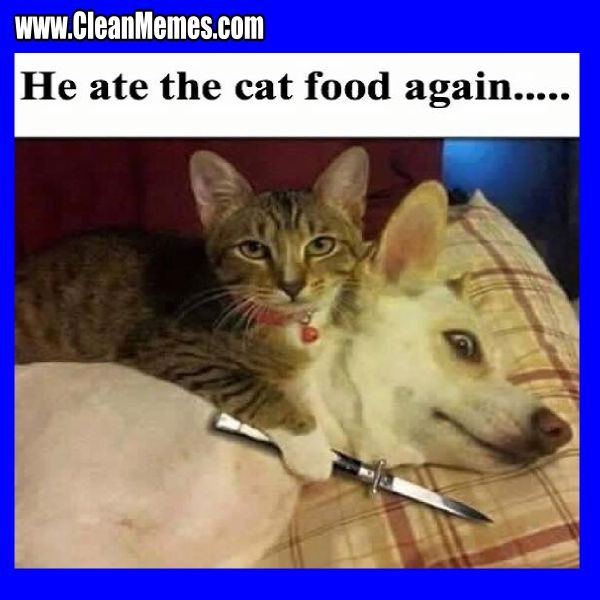 He Ate The Cat Funny Cat Memes Clean
