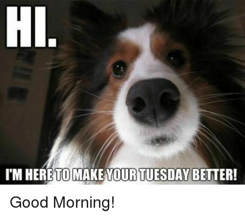 Hi I'm Here To Make Tuesday Meme