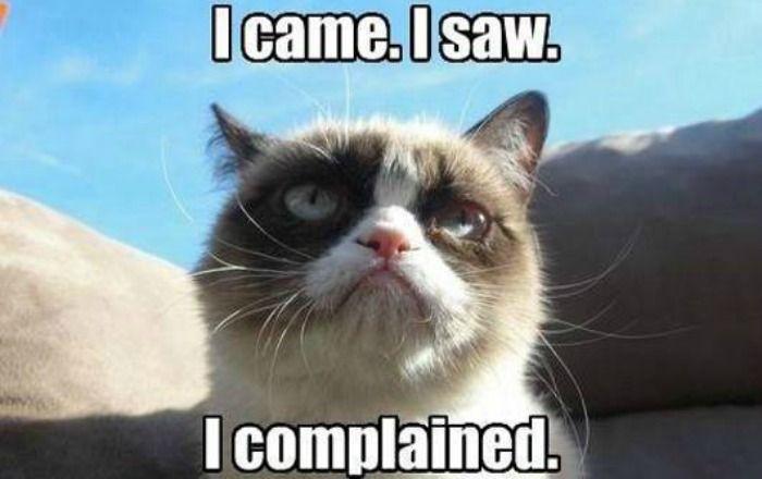 I Came I Saw Cat Meme