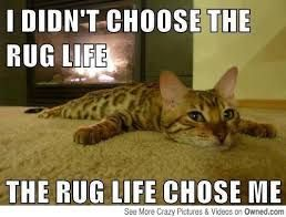 I Didn't Choose The Rug Funny Cat Memes Clean