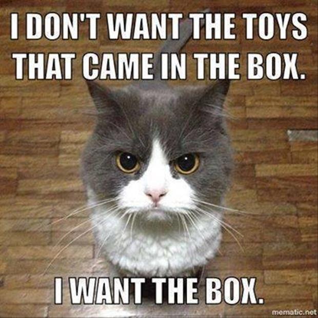 I Don't Want The Toys Cat Meme