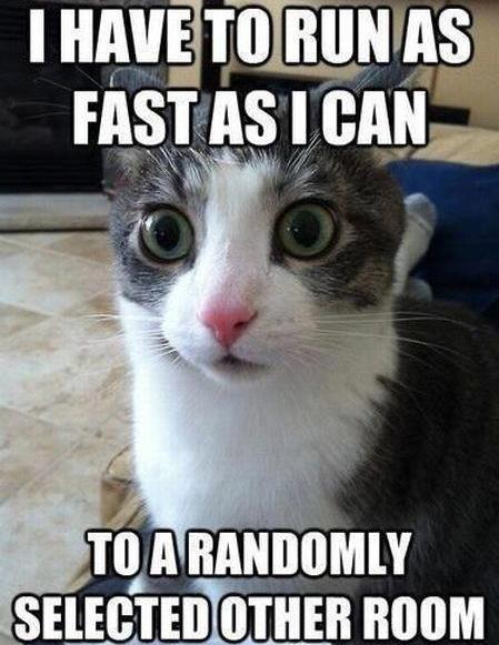 I Have To Run Cat Meme