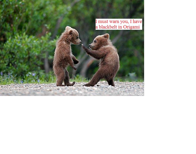 19 Hilarious Cub Meme That Make You Laugh | MemesBoy