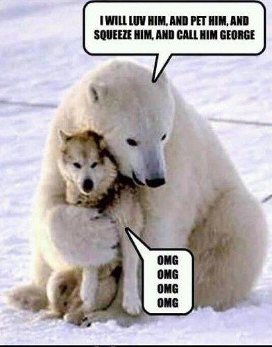 I Will Luv Him And Pet Polar Bear Meme