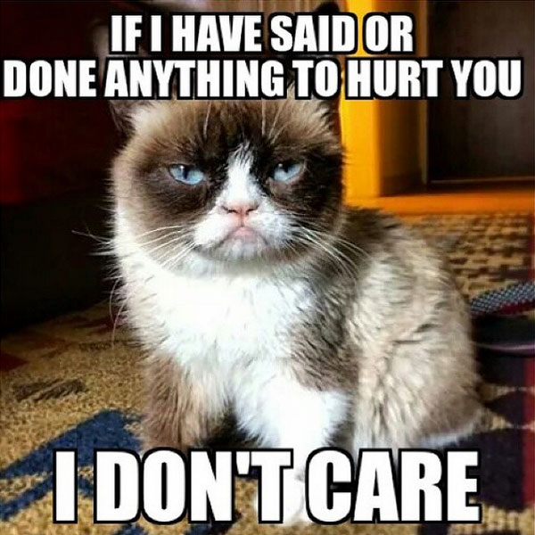 If I Have Said Or Cat Meme