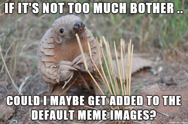 If It's Not Too Much Armadillo Meme
