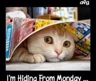 I'm Hiding From Monday Monday Meme