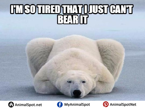 I'm So Tired That I Just Polar Bear Meme
