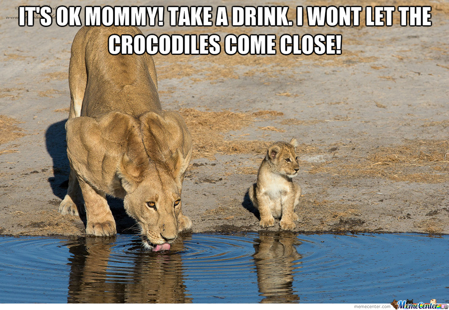 It's Ok Mommy! Take A Drink Cub Meme