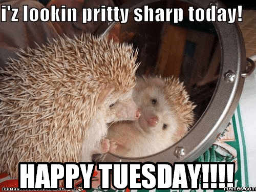 I'z Lookin Pritty Sharp Tuesday Meme
