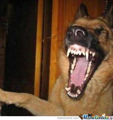 Jokey Dog Laughing Meme