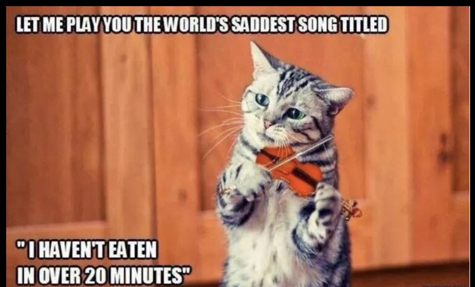 Let Me Play You Cat Meme
