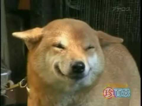Most Funniest Dog Laughing Meme