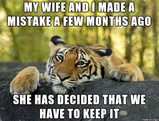 My Wife And I Made A Mistake Cub Meme