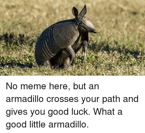 No Meme Here But An Armadillo Meme