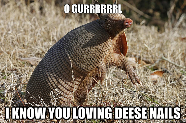 O GURRRRRRL I Know You Loving Armadillo Meme