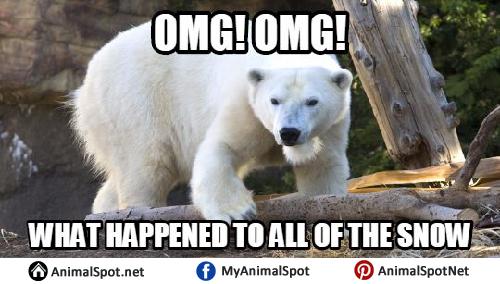 Omg! Omg! What Happend Polar Bear Meme