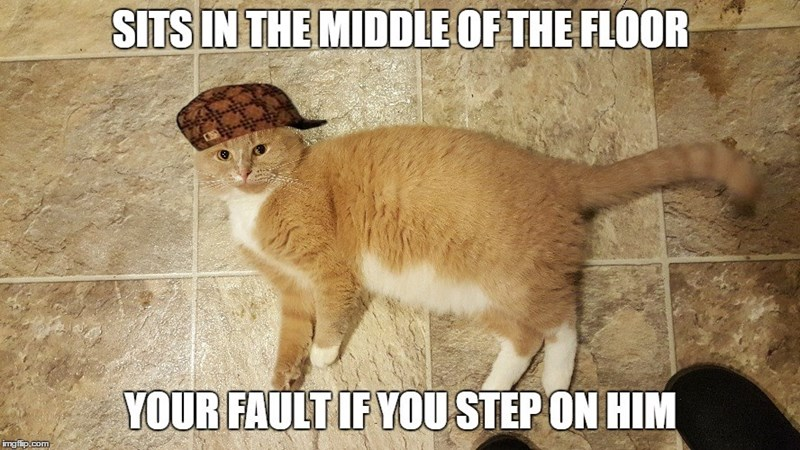 Sits In The Middle Of The Floor Cat Meme