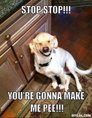 Stop Stop!!! You're Dog Laughing Meme