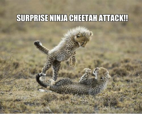 Surprise Ninja Cheetah Attack Cheetah Meme