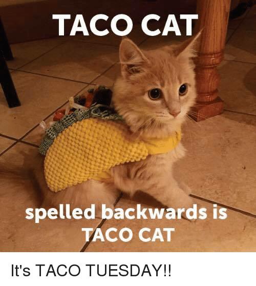 Taco Cat Spelled Backwards Tuesday Meme