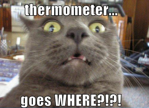 Thermometer Goes Where Cat Meme