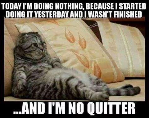 Today I'm Doing Nothing Cat Meme