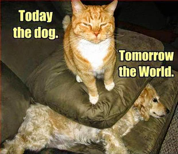Today The Dog Funny Cat Memes Clean