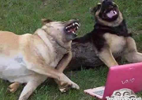 Very Funny Dog Laughing Meme