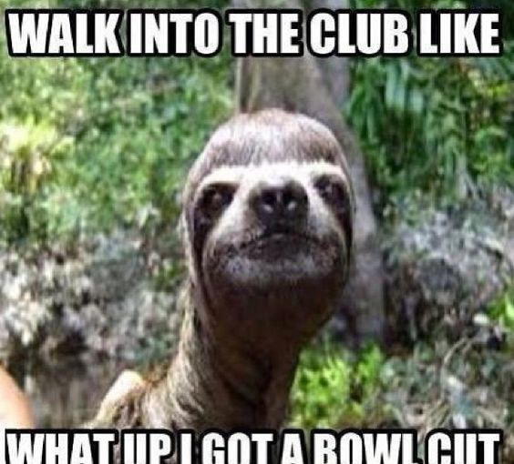 19 Amusing Sloth Meme Make You Laugh For Whole Day | MemesBoy