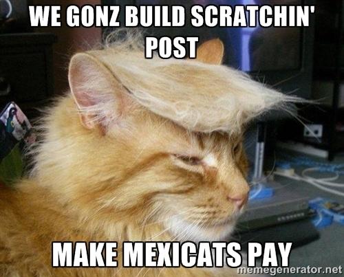 We Gonz Build Scratchin Post Cat Meme