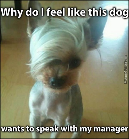 Whay Do I Can I Speak To The Manager Meme