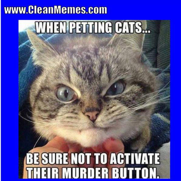 When Petting Cats Funny Cat Memes Clean