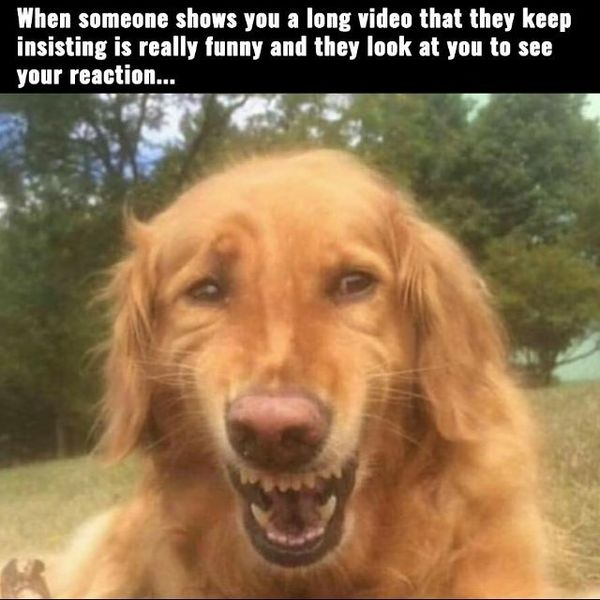 When Someone Shows Dog Laughing Meme