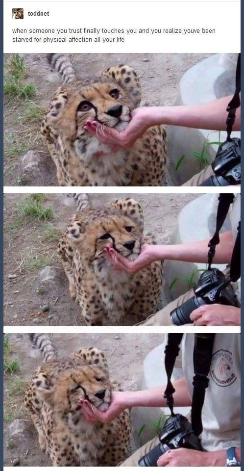When Someone You Trust Finally Cheetah Meme
