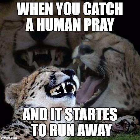 When You Catch A Human Pray Cheetah Meme