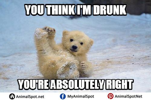 You Think I'm Drunk Polar Bear Meme