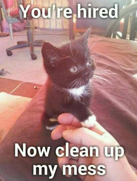You're Hired Now Funny Cat Memes Clean