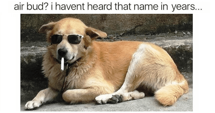 Air Bud I Haven't Dogs Meme